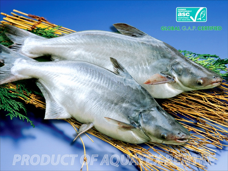 general infomation about pangasius fish aquatex bentre